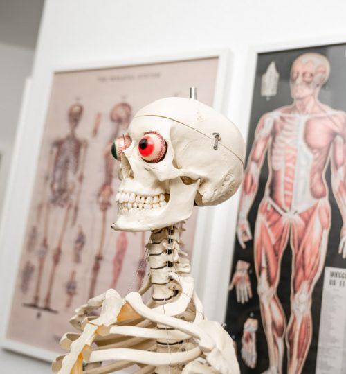 bewegbar-impressionen-skelett